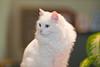 _6469_Cat_ARhlff_PAW