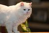 _6462_Cat_ARhlff_PAW