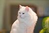 _6470_Cat_ARhlff_PAW