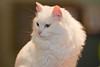 _6472_Cat_ARhlff_PAW