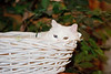 _5501_Cat_ARhlff_PAW