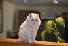 _6466_Cat_ARhlff_PAW