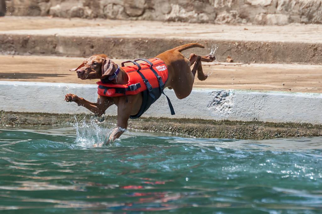 Doggie Dip Day at Landa park in New Braunfels, Tx.