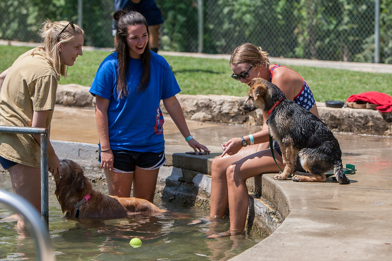Doggie Dip Day at Landa park in New Braunfels, Tx.
