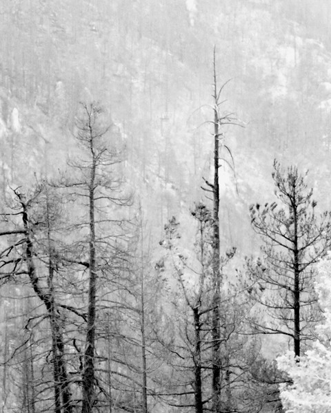 Forest Fire, Mount Lemon, AZ