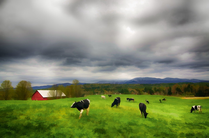 Stowe, VT Scenery - Cows, Mountains, and Barn