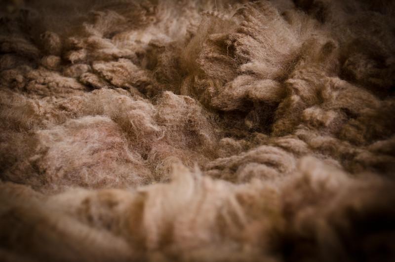 Six Paca Alpaca Farm, Bozrah, CT (16)