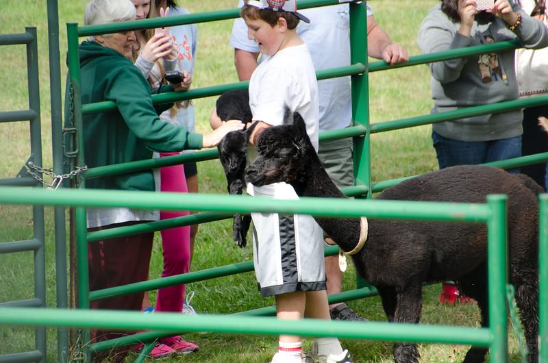 Six Paca Alpaca Farm, Bozrah, CT (22)