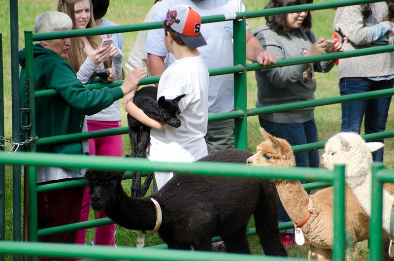 Six Paca Alpaca Farm, Bozrah, CT (23)