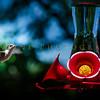 Hummingbirds-Franklin Park, PA 7-10-16---7