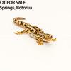 New Zealand gecko lizard