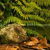 green tree lizard - gecko