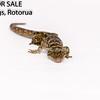 Reptile 8