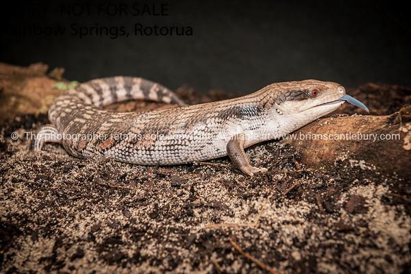 Reptile 10