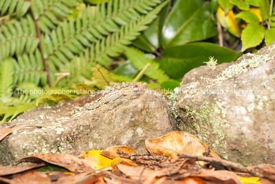 Reptile 5