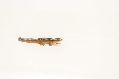 Reptile 4