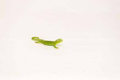 Reptile Gecko 7