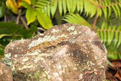 Reptile 3