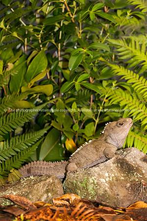 Reptile Tuatara 2
