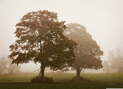 78990BB FoggyTrees 16x22