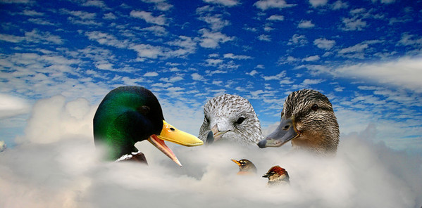 IMG_4191 ducks in the clouds a copy.jpg