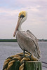 Tampa Bay, FL, October 2005.