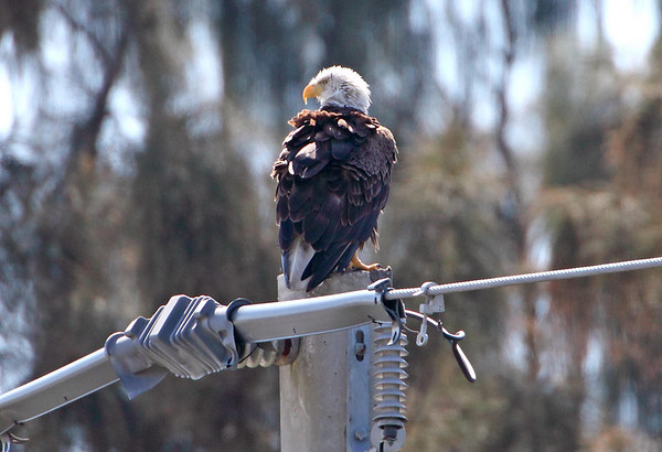 April 3, 2010 - Parent after dropping off food on power pole.