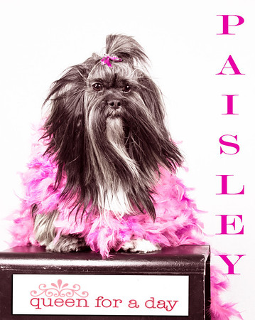 Paisley17