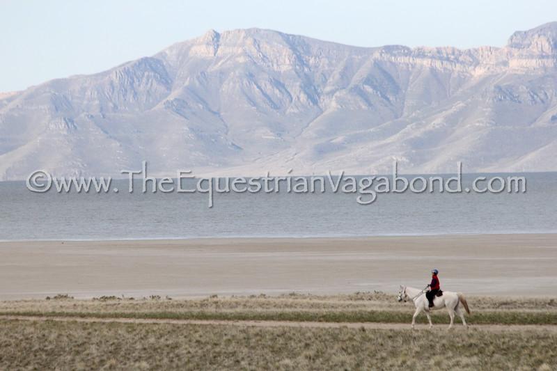 Lynn Lee exercises Greenbriar Al Jabal for Suzie at the April 2018 Antelope Island ride in Utah