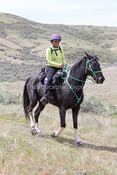 """Pam Davenport and """"Kentucky Natural Gaited Horse"""" The Traveling Man<br /> 2018 Eagle Canyon"""