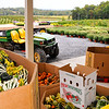 Abundance of flowers, gourds are on display at Lewis Orchard in Boyds MD