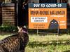 Halloween fear covid