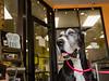 dog washing and coffee shop