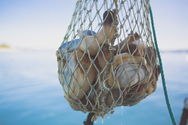 08.19.15 Alaska Ice Seafoods