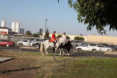 Bullfights_132