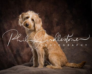 Phil Girdlestone Photography