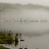 Wiarton Marina on a foggy spring morning