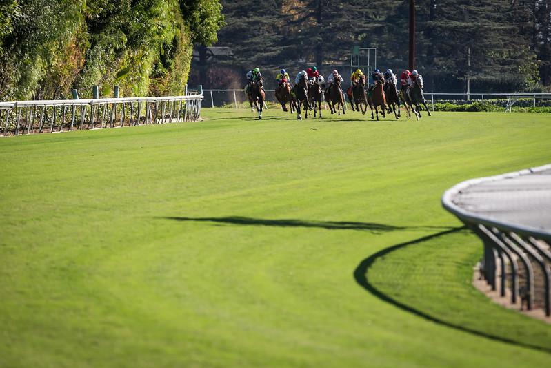 Santa Anita downhill turf racing 11.01.13.