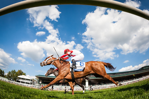 Sapphire Kitten (Kitten's Joy), Julien Leparoux up, runs 2nd in the (G3) Jessamine Stakes at Keeneland 10.07.15.