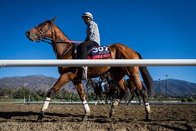Little Mike gallops at Santa Anita 10.31.13.