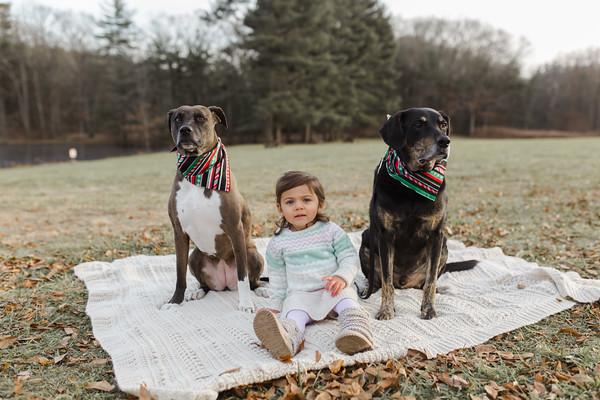 Abbie_Dogs-8