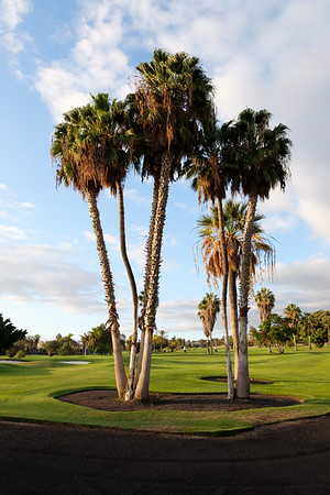 Golf Adeje_20191116_8575