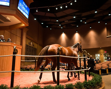 Awesome Feather in the sales ring at Fasig Tipton 11.04.13.