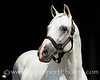 Adena Springs : 53 galleries with 2911 photos