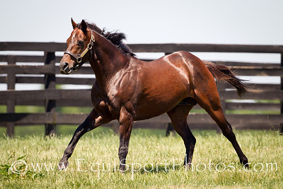 Awesome Again at Adena Springs on 6.30.2011
