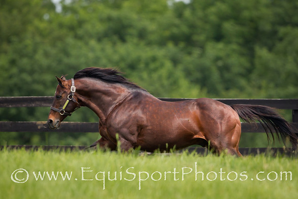 Awesome Again at Adena Springs on 06.02.2011