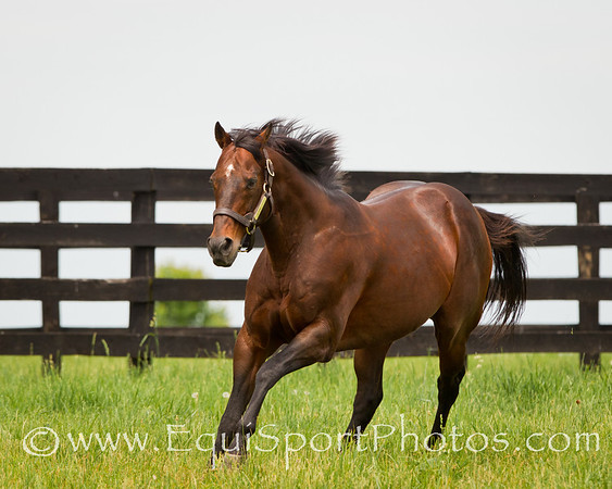 Awesome Again at Adena Springs 6.02.2011mw