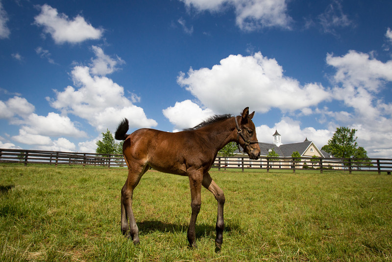 SomethinaboutLaura - Bernardini '12.  I believe this filly is 7 weeks old.  She is turned out with 4 or 5 other mare and foals in a large field.