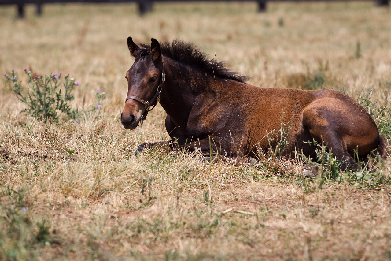 somethingaboutlaura - bernardini on 7.6.2012.  she is turned out in a smaller paddock with one other mare and foal.