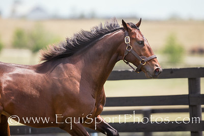 Fort Larned at Adena Springs on 7.9.2014.